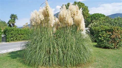 winterharte gräser garten sichtschutz pflanzen gras die neueste innovation der
