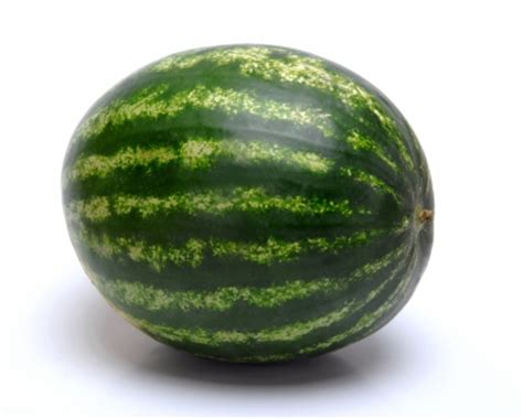 history of the watermelon file watermelon jpg uncyclopedia the content free