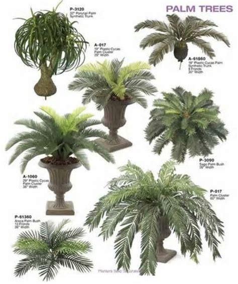 palme zimmerpflanze arten palmenarten als zimmerpflanzen winterharte exotische