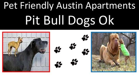 Apartments In Dc That Allow Pit Bulls Apartments In Dc That Allow Pit Bulls 28 Images Pit
