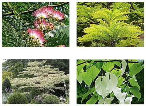 Exceptionnel Que Planter Dans Le Jardin #2: okarbreideal-l720-h512.jpg