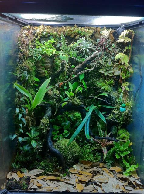 vivarium setup  poison dart frogs frog terrarium