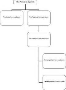 central nervous system worksheet abitlikethis