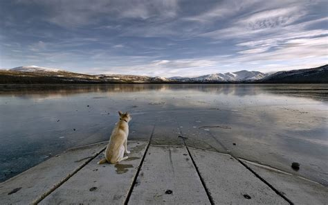 lonely puppy lonely wallpaper