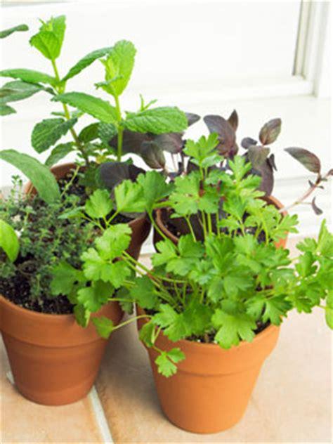 Indoor Winter Vegetable Garden Indoor Vegetable Garden Tips At Womansday Winter