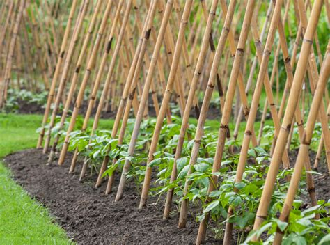 Bamboo Bean Trellis grow up how to design vertical gardens for tiny spaces inhabitat green design innovation