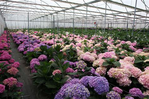 mercato fiori terlizzi az agricola vino dott mauro mercato dei fiori terlizzi