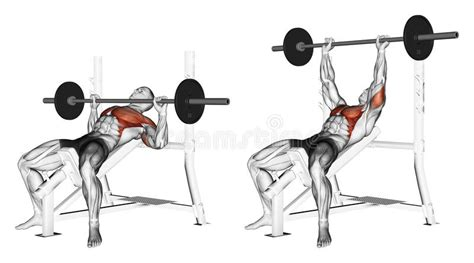 bench press steps exercising press of a bar lying on an incline be stock