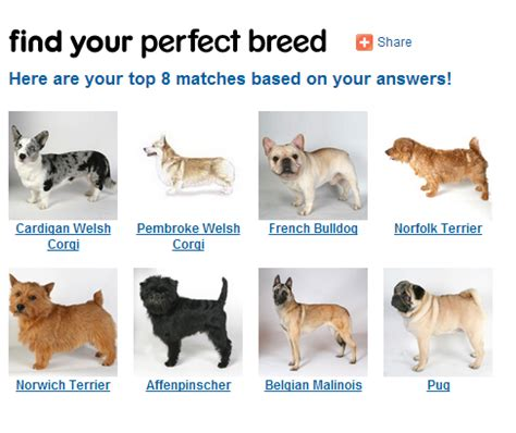 picking a puppy how to a breed 4 steps