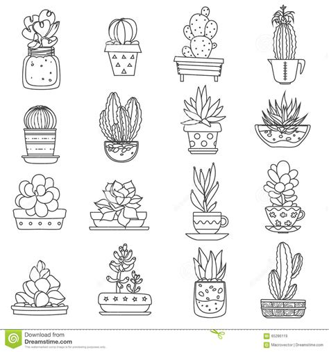 Types Of Soil For Gardening - cactus line icons set stock vector image 65286119