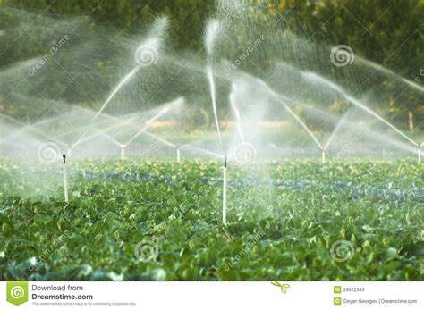 vegetable garden sprinklers irrigation systems in a vegetable garden stock photos