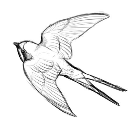 barn swallow tattoo designs 22 best traveltoo images on swallows birds