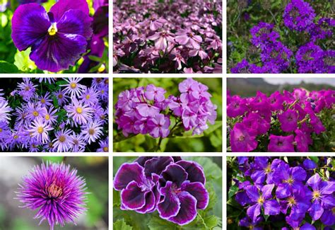 Purple Garden Flower 25 Purple Flower Ideas For Your Garden Pots And Planters