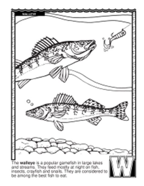 click the barracuda fish coloring coloring pages of