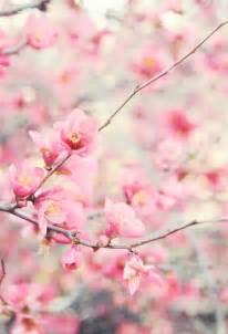beautiful flowers flowers photo 33623962 fanpop