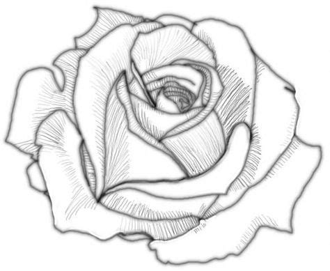 how to draw doodle roses flower drawings www pixshark images galleries