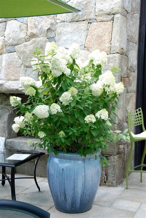 Planters Fac by 25 Best Garden Pots Ideas On