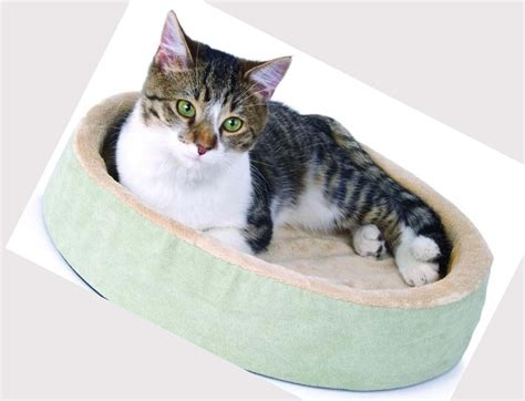 cats beds heated cat beds