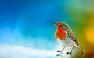 Wallpaper With Birds by Bird Beak Fly Animal Hd Wallpaper 1725171