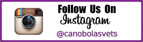 follow us on instagram template canobolas family pet hospital vet orange nsw