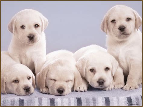 imagenes de animales furiosos related keywords suggestions for imagenes de perros bonitos