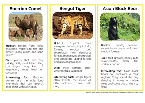 printable animal fact cards animals of the seven continents nomenclature and