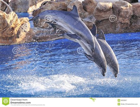 Bottle Nosed Dolphin Royalty Free Stock Photography ...