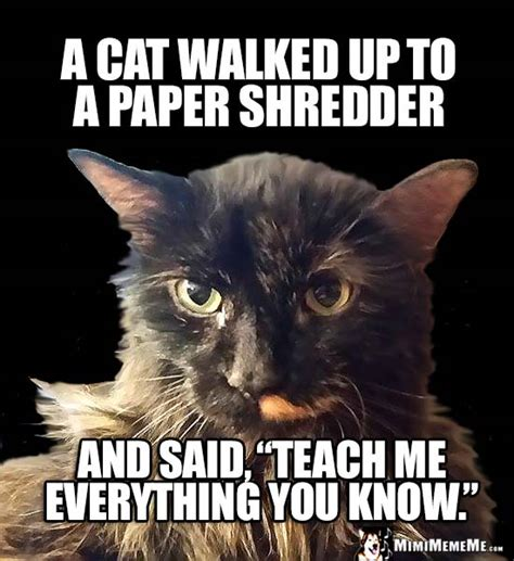 Newspaper Cat Meme - feline joke a cat walked up to a paper shredder and said