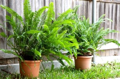 have you known these top 10 foliage plants for your garden blog nurserylive com gardening in