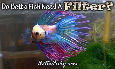 Do Betta Fish Need Light by 17 Best Images About Betta Fish Pics On