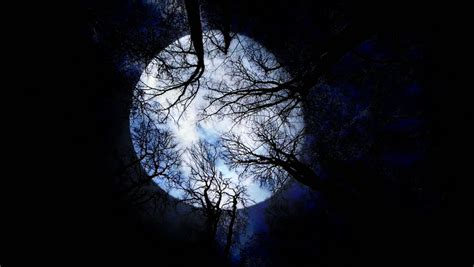 full moon and mood swings shade trees stock footage video shutterstock