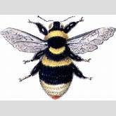 Bumble-Bee-Clip-Art-GraphicsFairy - The Graphics Fairy