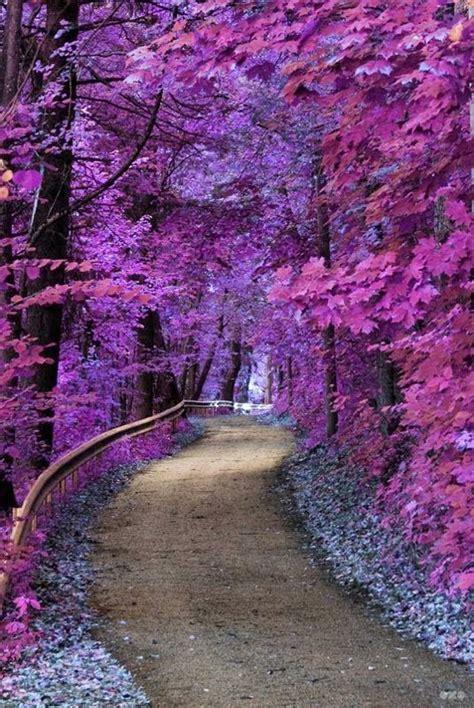 imagenes de paisajes hermosos para descargar im 225 genes de paisajes hermosos con reflexiones para