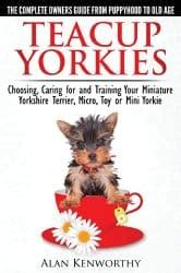 taking care of a teacup yorkie teacup yorkie the pocket sized terrier