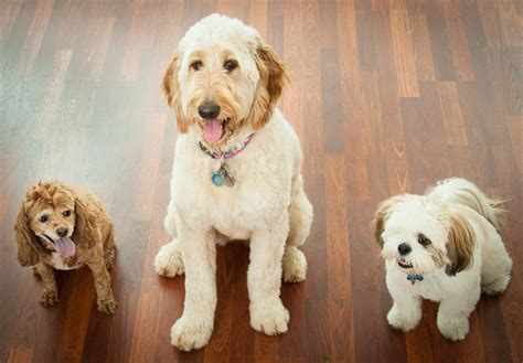 choosing the best dog breed for your family and children top 8 dog breeds for your family