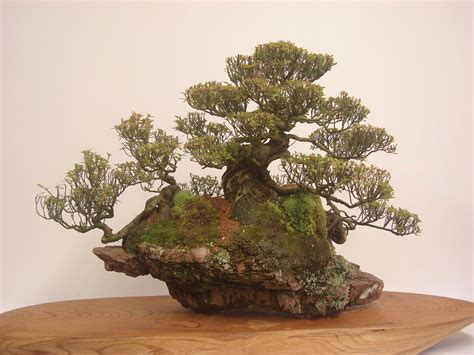Compare Prices On Bonsai Rock Garden Online Shoppingbuy Bonsai Rock Garden