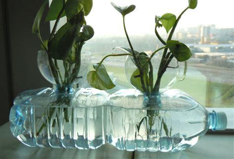 Pothos In Acqua by Talea Fiori E Foglie