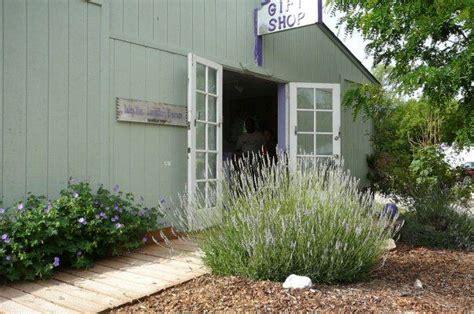 lavender farm for sale in buhl idaho