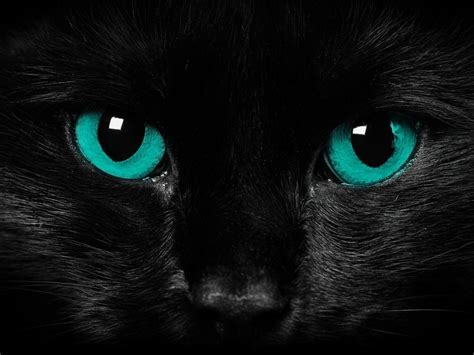 awesome wallpaper of cat warriors cats backgrounds wallpaper cave