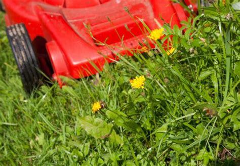 Rasen Unkraut Entfernen 3611 by Unkraut Im Rasen Bek 228 Mpfen Obi Ratgeber