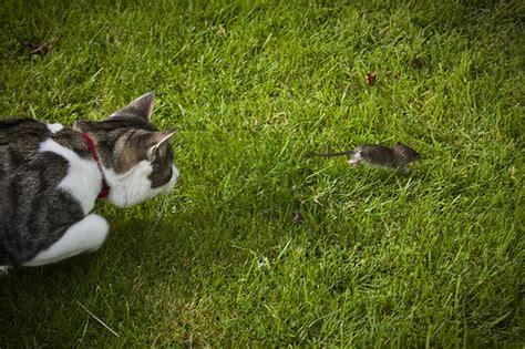 come allontanare i topi dal giardino come allontanare i topi dal giardino