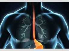 Viewpoint: Doctors reconstruct severely damaged oesophagus ... Lancet