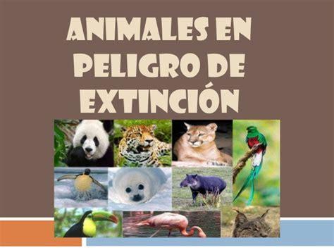 imagenes animales y plantas en peligro de extincion animales en extincion