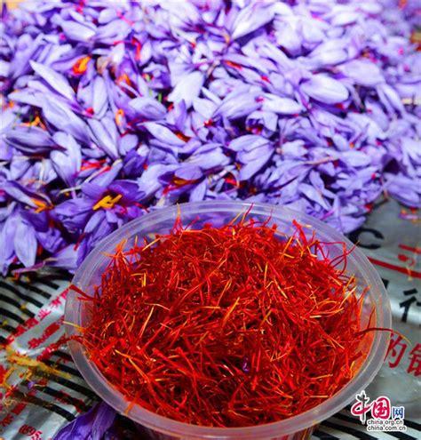 harvesting saffron in china s fujian sino us