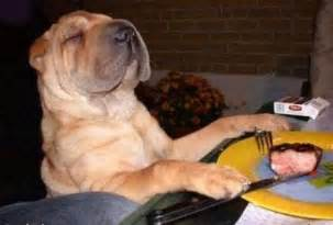 Dog praying before eating funny pictures
