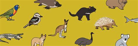 australian animals lesson esl library blog