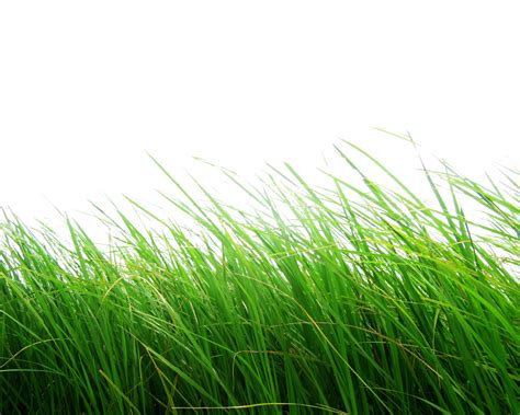 editor imagenes png online grass png images pictures