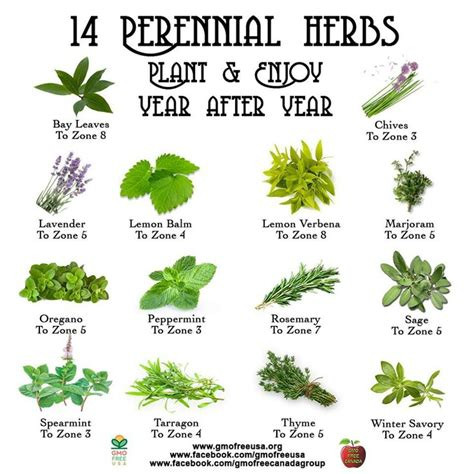 Perennial Herb Garden Layout Perennial Herbs Gardening Perennials Charts And Coaching