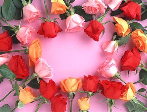 imagenes de rosas lindas gratis bonitas rosas en diferentes colores imagen 3722
