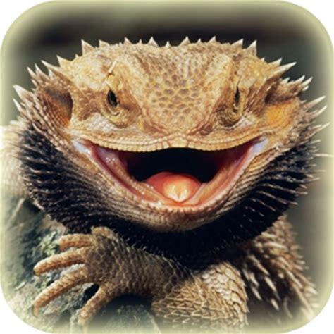 bearded dragon heat l wattage reptiles amphibians lincolnshire wildlife park
